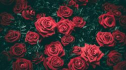 VIP Flowers & Bouquets: How to Choose the Best Flower People